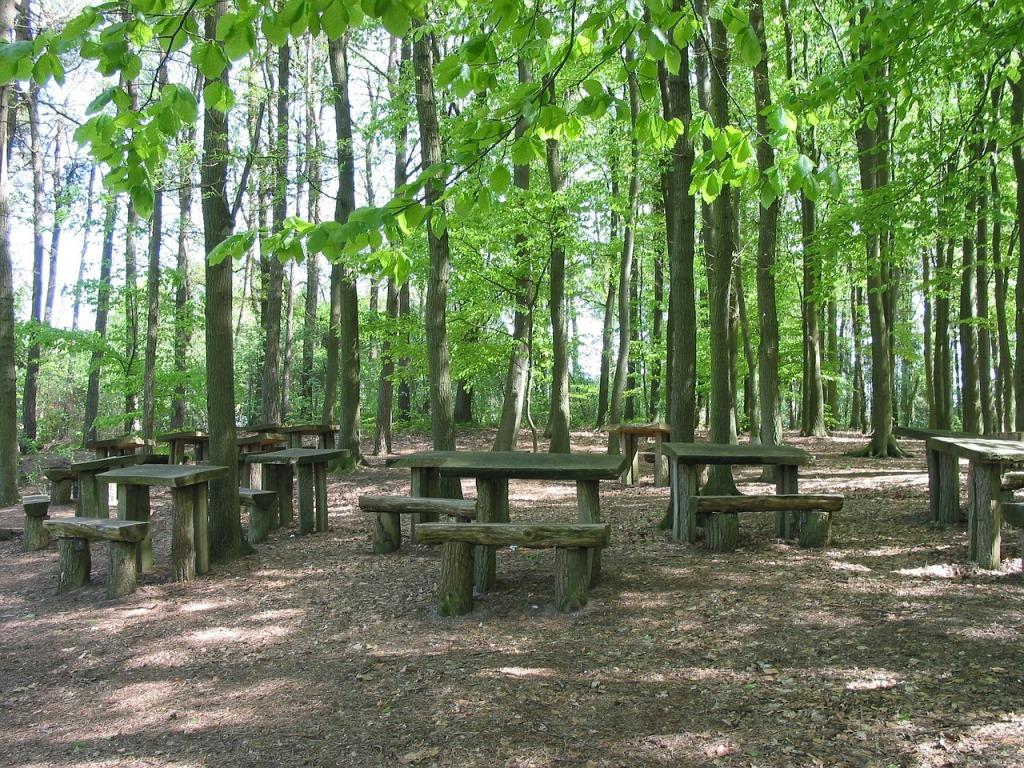 forêt école